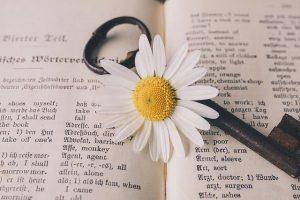 A daisy and a key on an open dictionary.