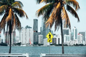 Miami palm trees, sea and tall, white buildings
